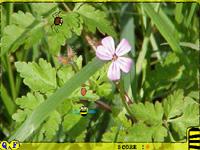 Скачать флеш игру Пчела
